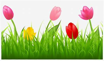 Tulips Grass Clipart Spring Colorful Tulip Border