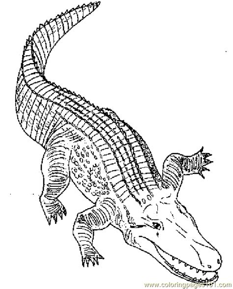 colallig coloring page  alligator coloring pages