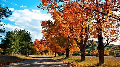 Autumn Trees Nature Wallpapers Road Leaves Beside