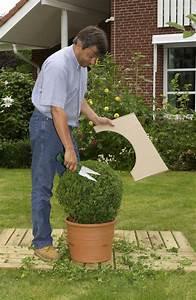 Buxbaum Schneiden Wann : buchs schneiden buchsbaum schneiden wann garten ~ Lizthompson.info Haus und Dekorationen