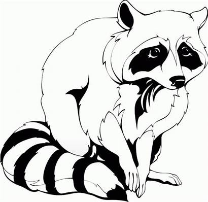 Raccoon Clipart Clip Animals Coloring Racoon Camping