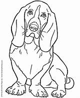 Coloring Dog Pages Hound Basset Dogs Printable Sheets Print Sheet Puppies Honkingdonkey Colouring Pet Bassett sketch template