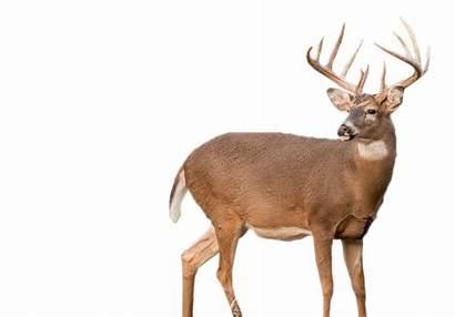 Deer Hunting Deers Clipart Transparent Opportunities Briarwood