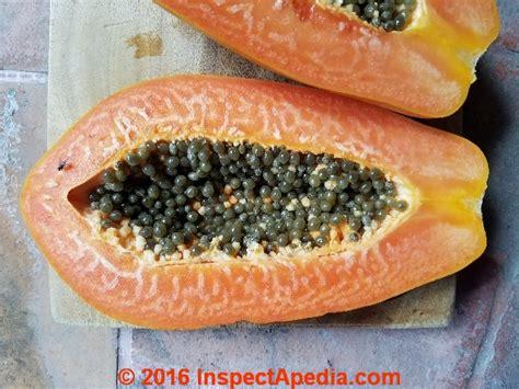 papaya flesh disorder white growth anomaly diagnosis