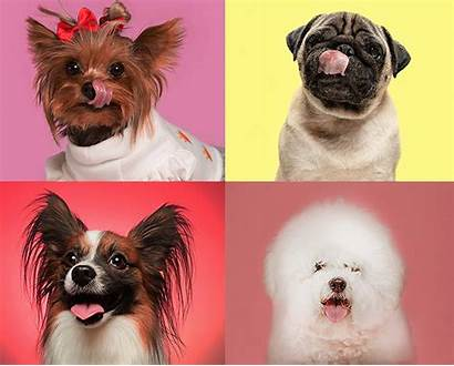 Dogs Breeds Dog Stay Puppy Adorable Puppies