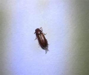 Insecte De Maison : qui pourrait me dire quel est cet insecte notre ~ Melissatoandfro.com Idées de Décoration