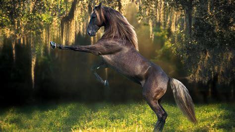 Pixel Art Landscape Wallpaper Horse Wallpaper Beautiful Hd 10281 Wallpaper Walldiskpaper