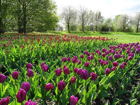 Britzer Garten Ostern by Die 13 Sonderschau Tulipan Im Britzer Garten Hat