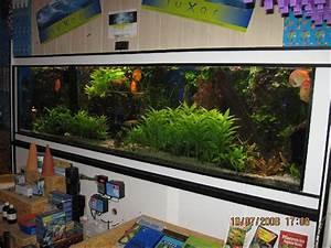 Aquarium Ohne Wasserwechsel : risieges aquarium komplett ohne fische mit einrichtung kies pflanzen filter ~ Eleganceandgraceweddings.com Haus und Dekorationen