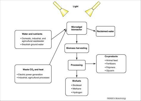 enhanced  fixation  biofuel production