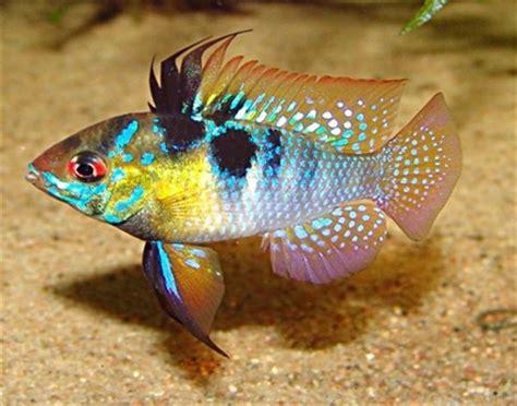 les poissons de l aquarium les poissons d aquarium