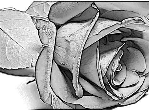 pencil drawings charcoal drawings  art galleries april