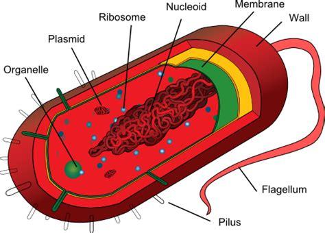 Chapter Biology Schedule Lewissci