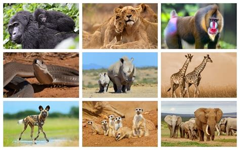 25 Animals in Africa that you should know about Swedish
