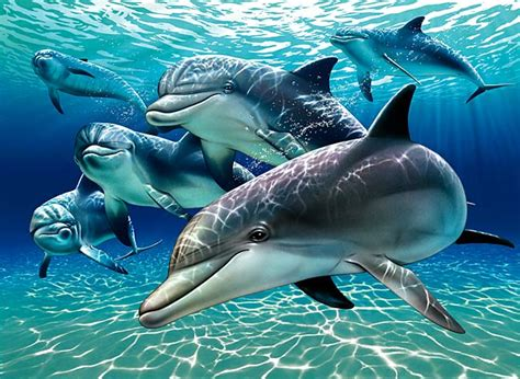 beautiful blue 39 s superior dolphins superior ability to heal may help humans