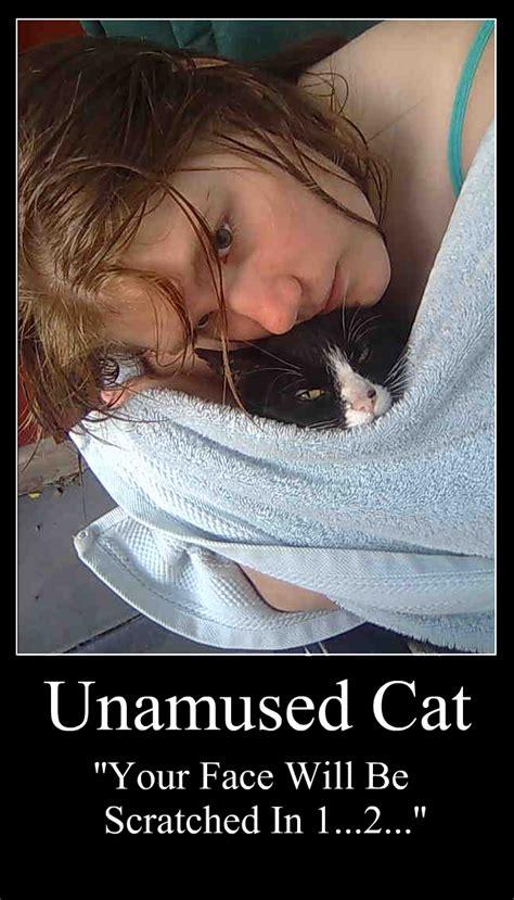 Unamused Cat Meme - unamused cat by polisbil on deviantart