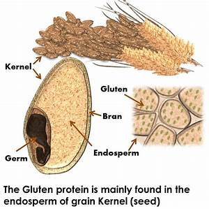 What's Gluten? And Why Should You Care? – Strides on Your Path