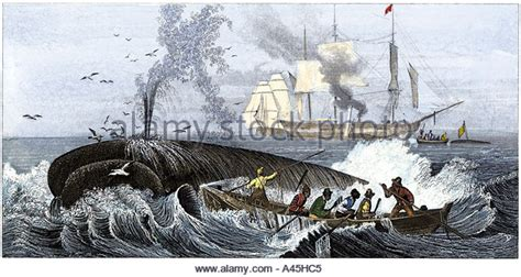 Whaling Longboat by Whaling Ship 19th Century Stock Photos Whaling Ship 19th