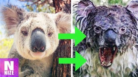 suesse tiere die gefaehrlich werden koennen youtube
