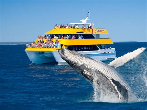 Spirit Of Hervey Bay  Whale Watching From Hervey Bay