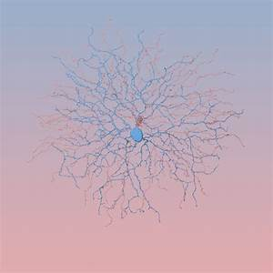 Rose Quartz Und Serenity : rose quartz and serenity neurons ~ Orissabook.com Haus und Dekorationen