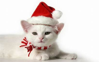 Christmas Kitten Cat Cats Animals Wallpapers Adorable