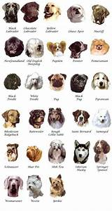 Small Dog Breeds Names Mexican Purse Types Of Dogs - Litle ...