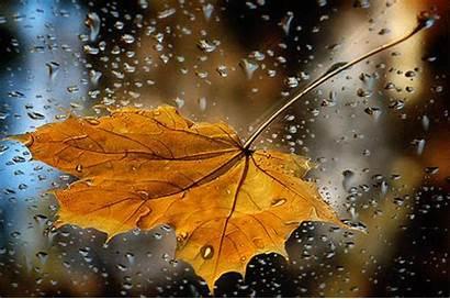 Rain Autumn Fall Animated Leaves Falling Morning