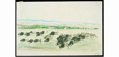 Plains Drawings Indian Buffalo Ledger American Drawn