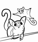 Glider Sugar Coloring Gliders Drawing Svg Animal Clipart Printable Template Animals Silhouette Drawings Clip Colouring Pet Sheet Sugarglider Glidergossip Unusual sketch template