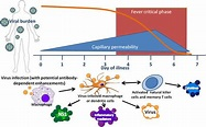 Dengue fever and mechanisms of the immune response to the ...