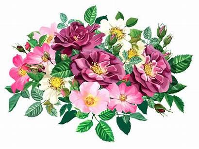 Transparent Bouquet Rose Flower Clipart Bunch Patterns