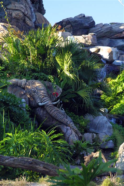 tree  life  disneys animal kingdom