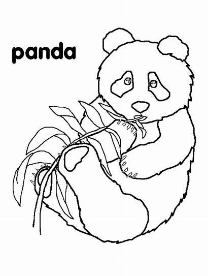 Coloring Pages Panda Pandas Bears Bear Hibernation