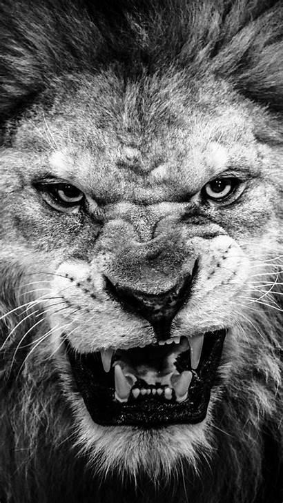 Lion Wallpapers Roaring