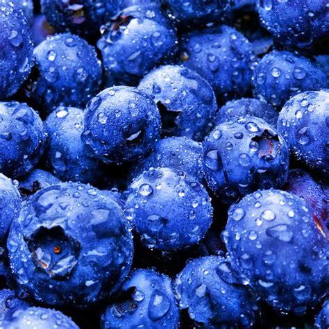 blueberry blueberries photo  fanpop