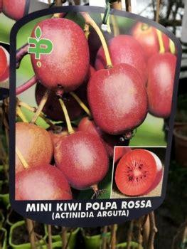 Ist Bambus Winterhart 1216 zitronenlust onlineshop f 252 r mediterrane pflanzen und