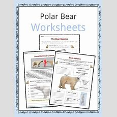Bear Facts, Information & Worksheets  Teaching Resource