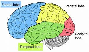 What Is Frontotemporal Dementia Or Frontotemporal Lobar
