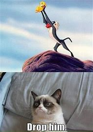 Best Funny Grumpy Cat Ideas And Images On Bing Find What Youll Love