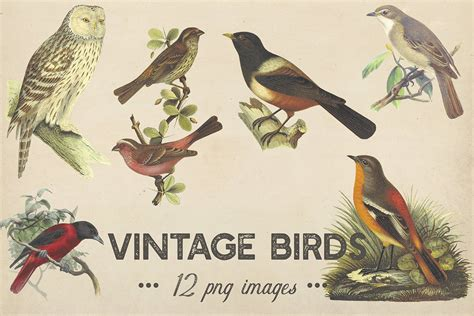 library  vintage chickadee clipart royalty  png