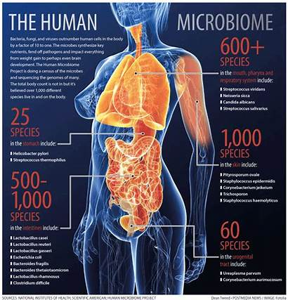 Types Infections Microbiology Microbial Human Humans Bacterial