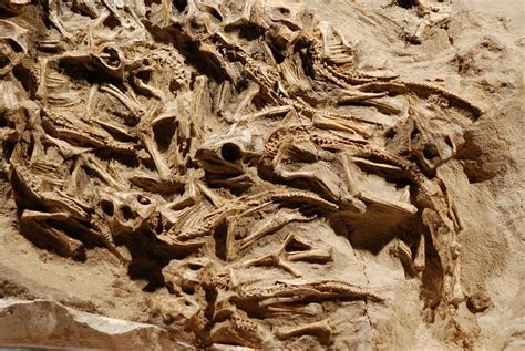 pictures gorgeous dinosaur nest  full  babies