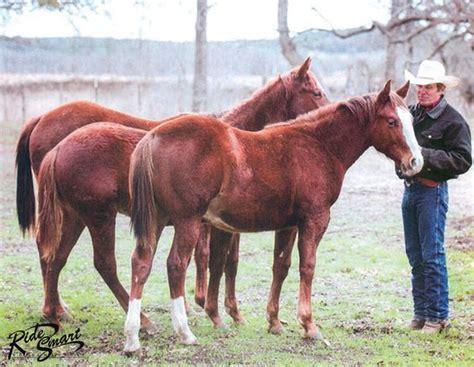 horses prey horsemanship craig cameron animals horsedigests horse