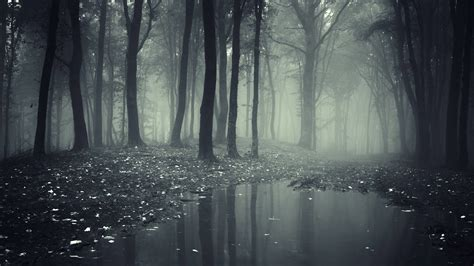 Spooky Wallpaper For by Spooky Forest Wallpaper 68 Images
