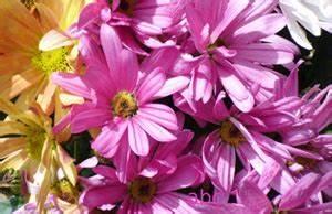 Gartenarbeit Im August : mit kindern rund ums gartenjahr teil 8 gartenarbeit im ~ Lizthompson.info Haus und Dekorationen