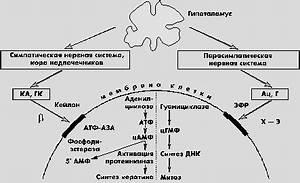 Бишкек лечение псориаза