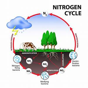 Why We Love Trees - The Nitrogen Cycle