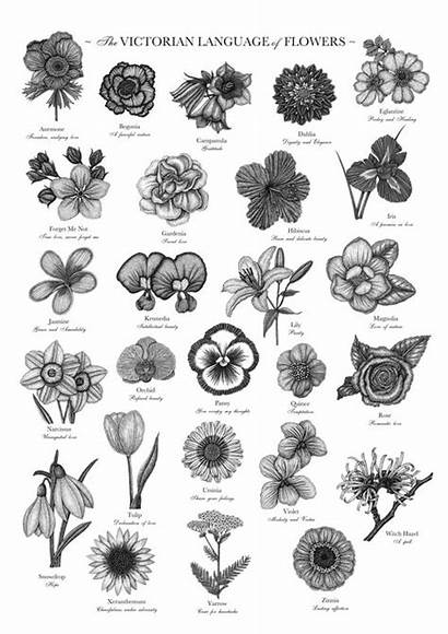Flowers Language Victorian Flower Floriography Birth Meanings