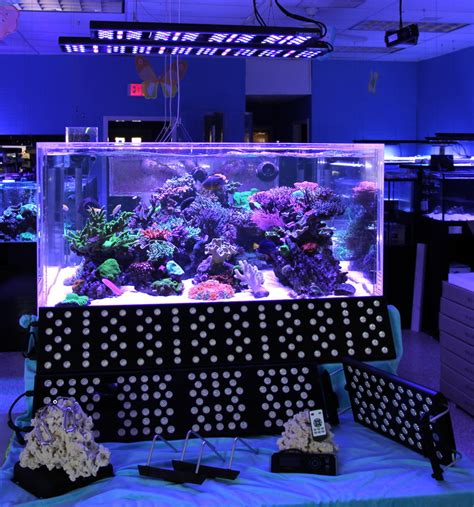 led lights for reef tank sealife led aquarium lighting review reefs